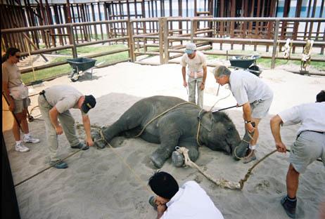 """"""" Не поддерживайте жестокость к животным - не ходите в цирк! """" ( 1 часть)"""